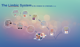 Copy of The Limbic System & its relation to criminals