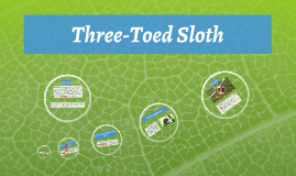 gehrig-three toed sloth