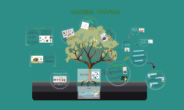 Copy of CADENA TROFICA