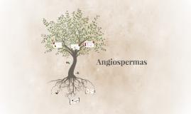 As angiospermas