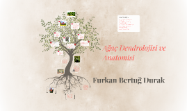 Ağaç Dendrolojisi ve Anatomisi
