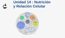 Unidad 14 : Nutrición y Relación Celular
