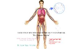 VASCULARIZACION DE LOS PULMONSES Y PLEURAS