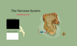 Copy of The Nervous System