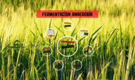 fermentacion anaerobia