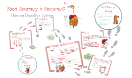 Food Journey & Enzymes