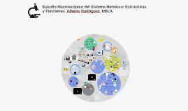Copy of Estudio Macroscópico del Sistema Nervioso: Estructuras y Fun