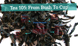Tea 105: From Bush To Cup