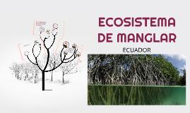 ECOSISTEMA DE MANGLAR (ECUADOR)