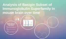 Basigin Subset of Immunoglobulin Superfamily