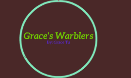 Grace's Warblers
