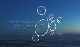 Neural system