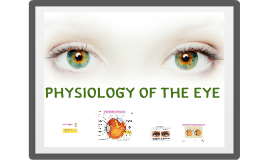 Copy of physiology of the eye