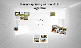 Razas caprinas y ovinas de la Argentina