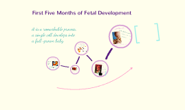 First Five Months of Fetal Development