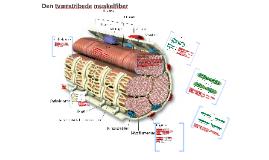 Muskelfiberens cellemembran, overfører kraften fra kontrakti