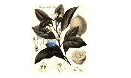 Evaluación de las condiciones de estabilidad de microcápsulas de jugo de limón obtenidas mediante secado por aspersión