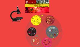 La Sangre: características y funciones