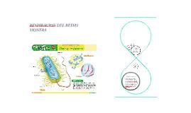 Copy of Respiracion del reino monera