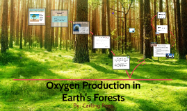 BIO 430 Oxygen production in earths forests