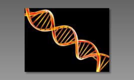 PCR project