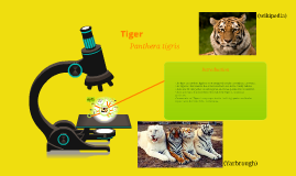 Tiger Conservation Biology Project