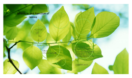 2 The structure and function of leaves