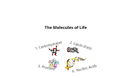 Copy of Molecules of Life