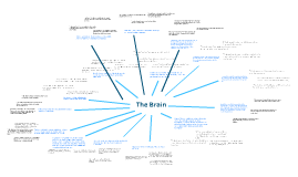 Copy of The Brain While Driving