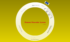 Human Muscualr system