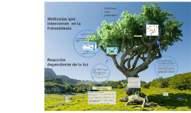 Copy of Moléculas que intervienen en la fotosintesis