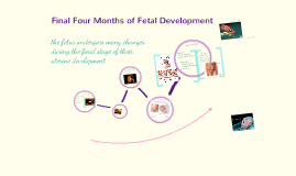 Final Four Months of Fetal Development