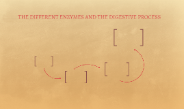 THE DIFFERENT ENZYMES AND THE DIGESTIVE PROCESS