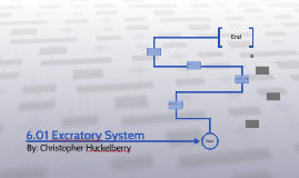 6.01 Excratory System