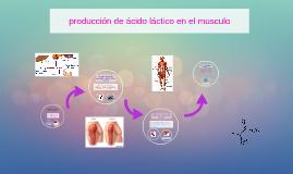 produccion de acido lactico en el musculo