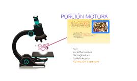 Copy of porción motora