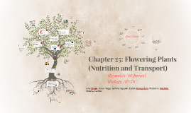 Chapter 25: Flowering Plants (Nutrition and Transport)