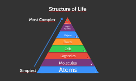Structure of Life