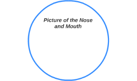 Picture of the Nose and Mouth