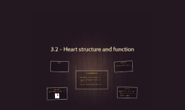 3.2 - Heart structure and function