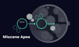 Miocene Apes
