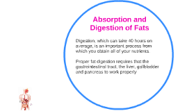 Absorption and Digestion of Fats