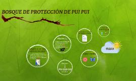 BOSQUE DE PROTECCIÓN DE PUI PUI
