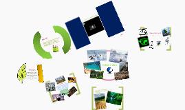 Ecologia e Valores resume