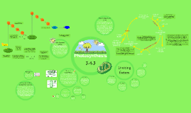 3.4.3 Photosynthesis