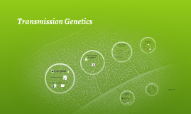 Transmission Genetics