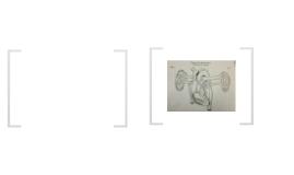 Heart Anatomy