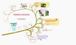 Copy of quercus