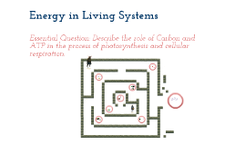 Energy in Living Systems