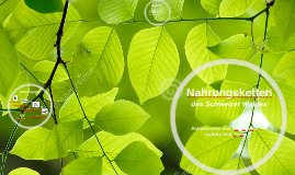 Copy of Nahrungsketten des Schweizer Waldes